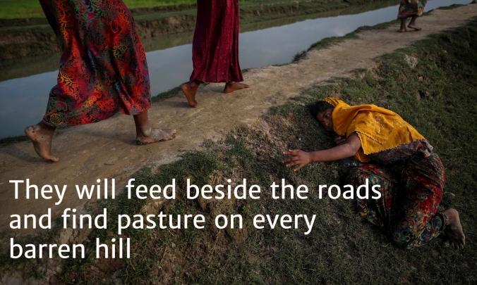 8 barren hills Rohingya 7
